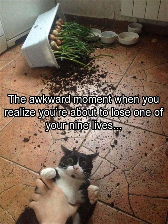 The photo is fantastic! Cats are such a mixed blessing at times