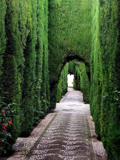 Would love to walk through a garden like this and just - When you walk through the garden ...