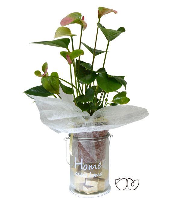 Planta anthurium con esta bonita planta decorativa de interior de anthurium llamativa por sus - Fuentes de interior baratas ...