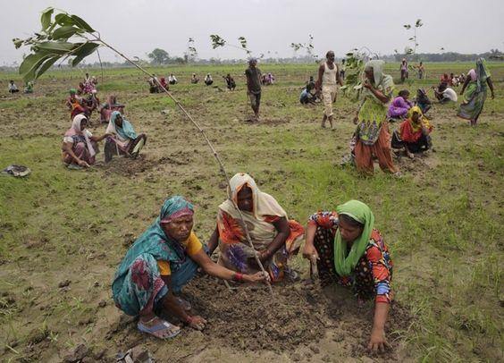 En 24 horas 800.000 personas en India sembraron casi 50 millones de árboles