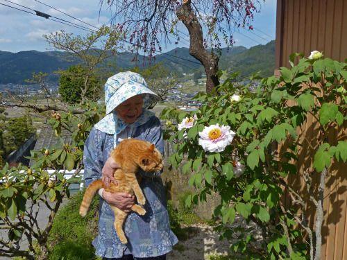 catsandtheirhumans:  花(=^・^=)もち吉 white-boots-walker/ウェブリブログ