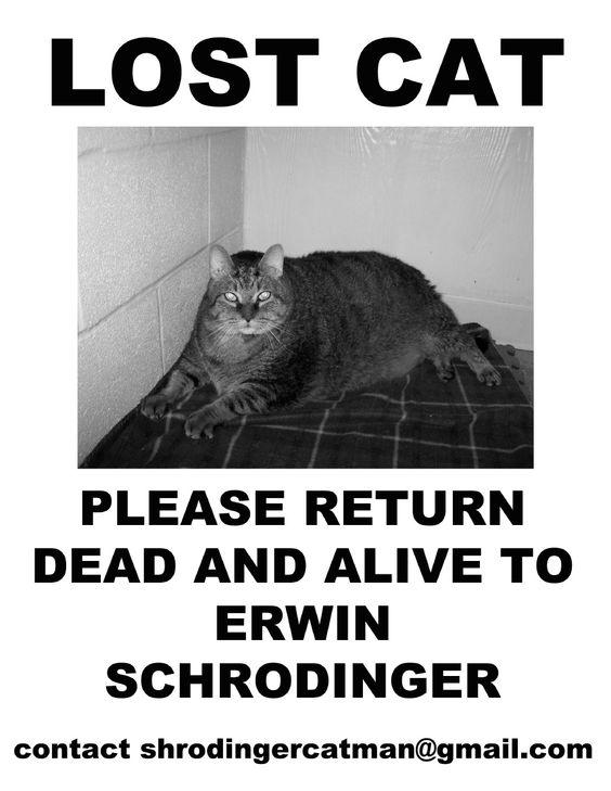Schrodinger's Lost Cat Flyer