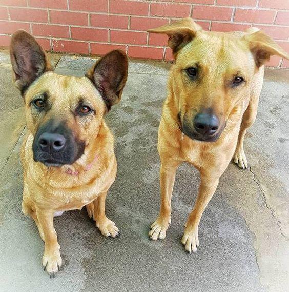 Meka & Noondy ~ brother & sister ~ Adopted 19.5.2016