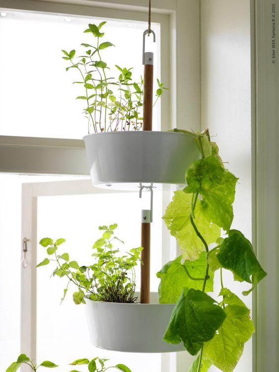 Skapa en vertikal trädgård genom att hänga flera BITTERGURKA amplar i varandra. Planterar gör du direkt i ampeln eller placerar krukväxter i den.