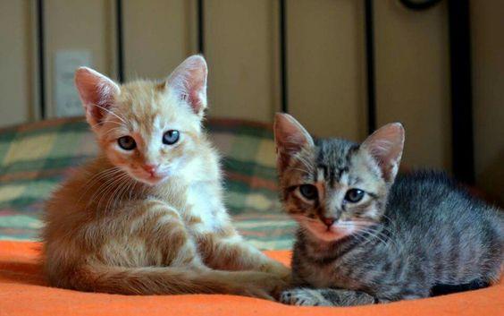 Hermanos en adopción