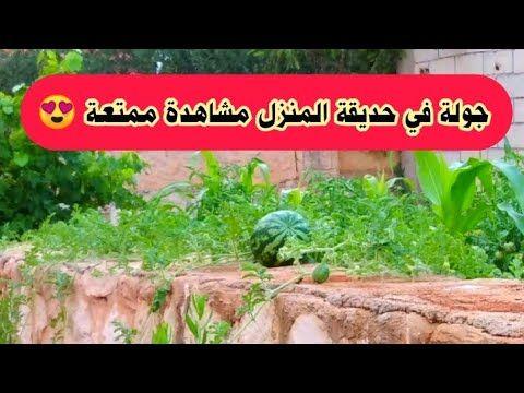 زراعة الخضروات في المنزل جولة ممتعة Youtube Farm Home Cooking Plants