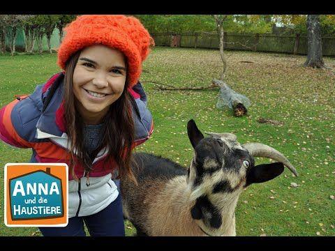 Anna Und Die Wilden Tiere Youtube In 2020 Tiere Wilde Tiere Haustiere