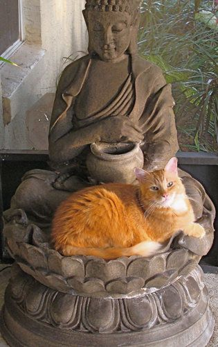 Seamus in the Lap of the Buddha Photo Credit: © Anne Kirkwood (Seamus was saved from the shelter and is a grateful, loving cat.):