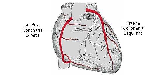Sistema Arterial Sistema Arterial Arterias Coronarias Sistema
