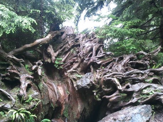 Heather Lake roots