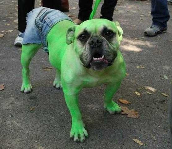 Diy Dog Costume Ideas Dog Halloween Costumes Dog Halloween Diy