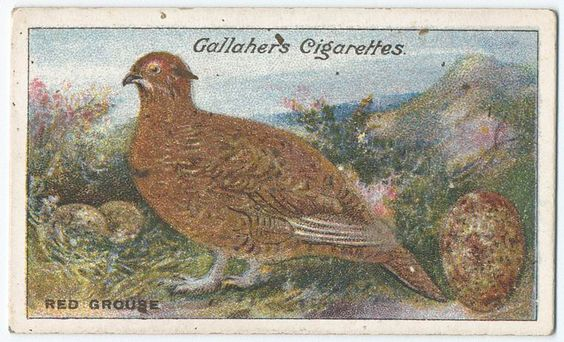 Red grouse. From New York Public Library Digital Collections.
