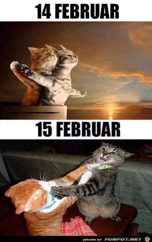 Valentinstag Jpg Cat Cat Cute Cat Food Katzen Katzen Diy