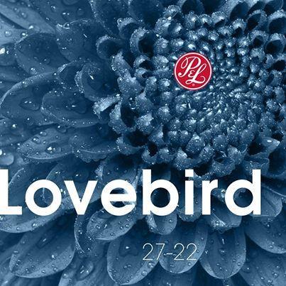 Pratt & Lambert Lovebird 27-22:  just a hint of blueberry???  Love this color chip.