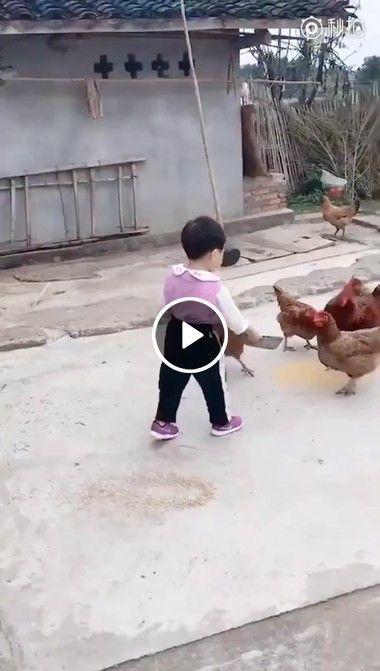 Criança alimentando as galinha é atacado