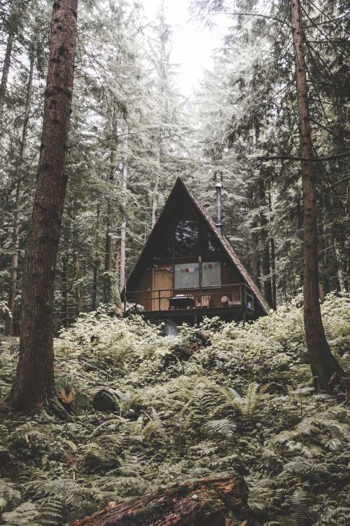 Cabin in the woods a frame triangle dream house for Cabin in the woods oregon