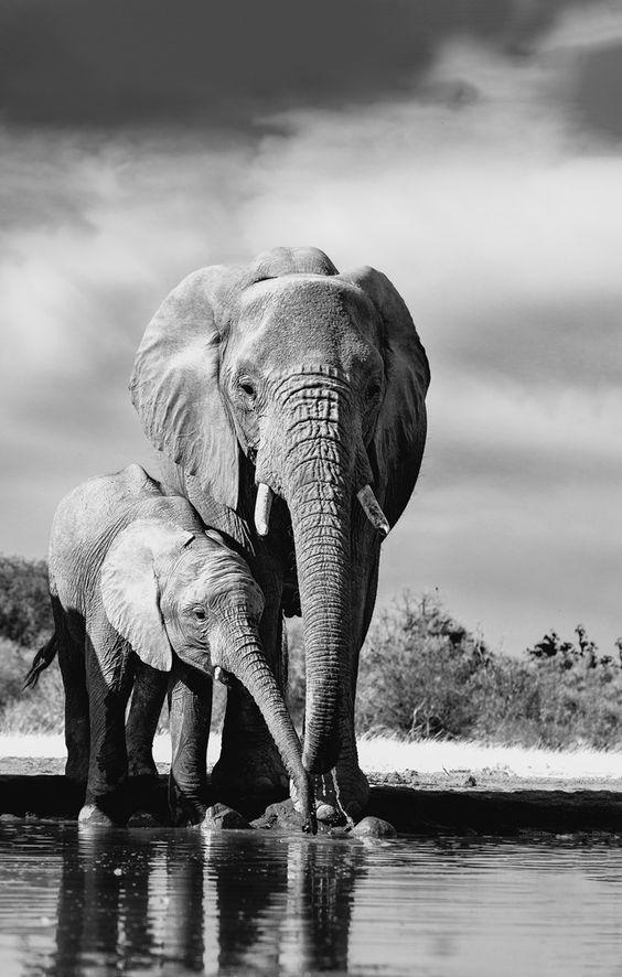 mitos de animales