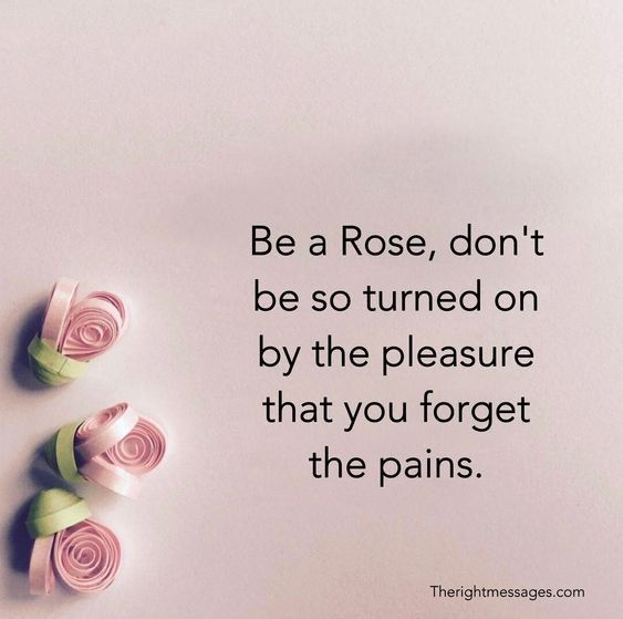Significance Of Roses Rose Quotes Quote Aesthetic Rare Words