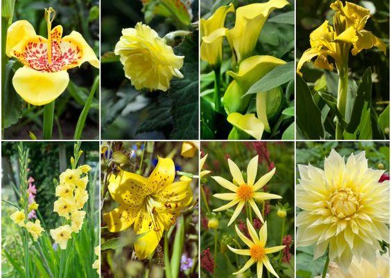 7 Zoltych Letnich Kwiatow Do Ogrodu Zielony Ogrodek Garden Plants