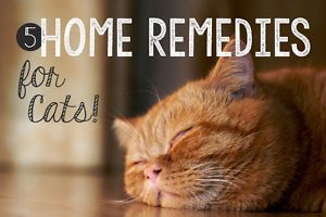 Nothing should replace the expert care of your favorite veterinarian when your cat is feeling sick. With that said, there are several natural home remedies that can help combat these common kitty problems:1....