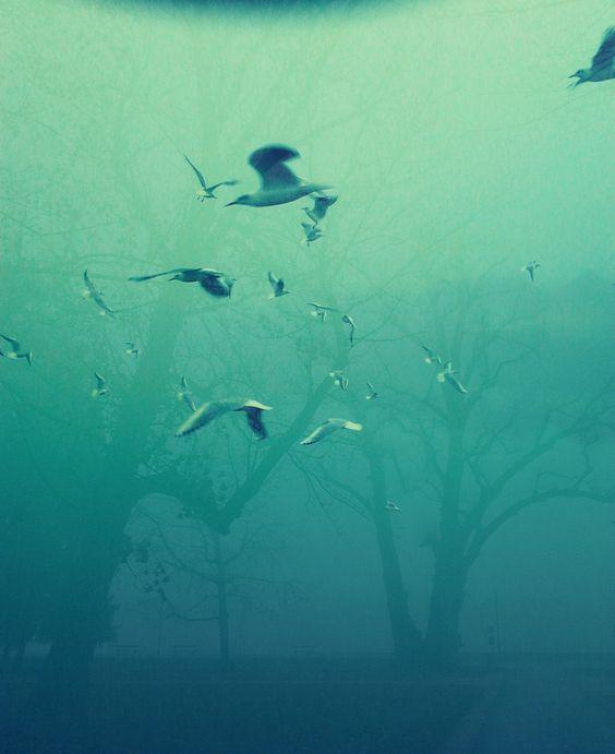 #möwen# #Bäume#  #blau# #grün# #Nebel#