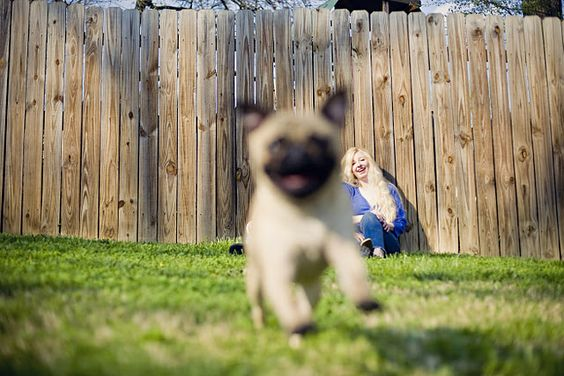 Happy Pug: Search, Pictures, Pugs