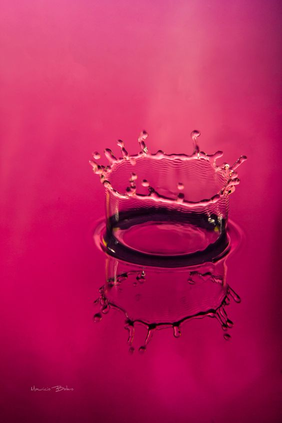 Crown    Photography by Mauricio Botero