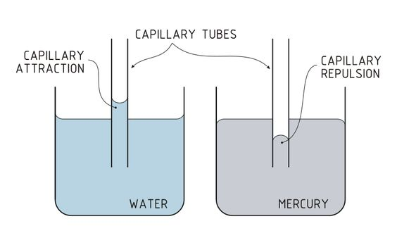 6 10) Another effects of Cohesion is Capillary action Capillary - solubility chart example