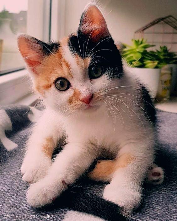 Suss Katzen Katzen Fakten Susse Katzen Baby Katzen