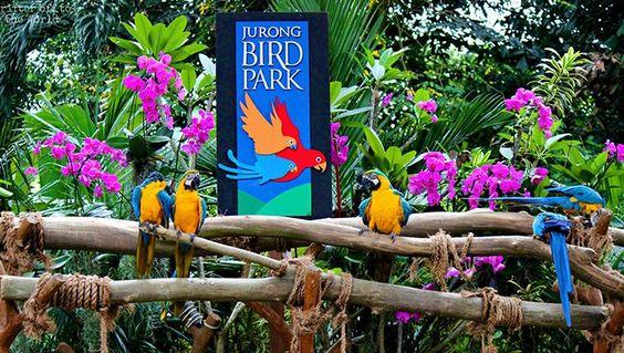 Vườn chim Jurong Bird Park thiên đường của các loài chim tại Singapore.