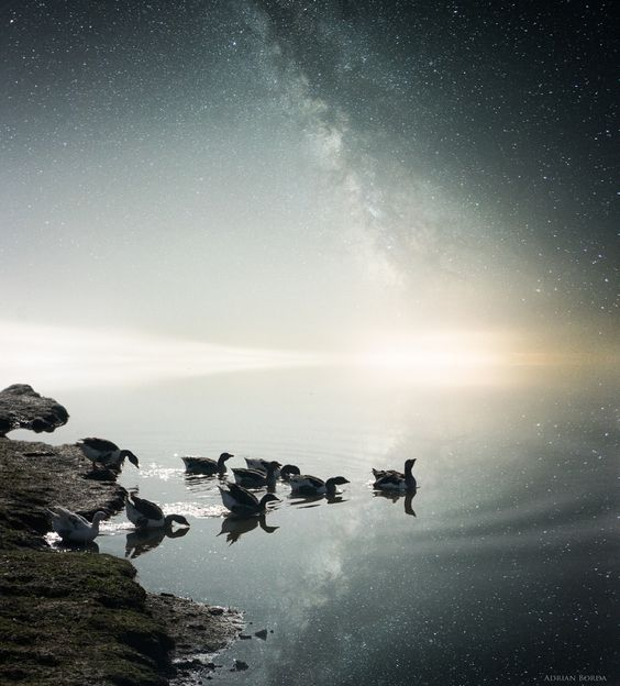 "Birds behold the splendor of the universe. Photograph ""Embracing Infinity"" by Adrian Borda."