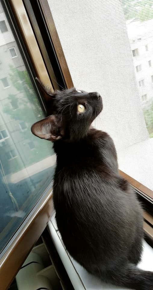 Pin On Kitties In The Window