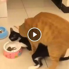 Esses dois gatinho estão brigando pela comida