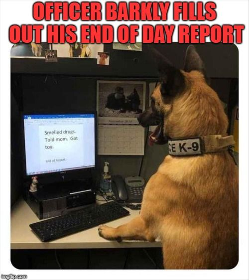 Officer Barkly Fills Out His End Of Day Report Made W Imgflip Meme Maker Funny Dog Pictures Funny Animals Funny Animal Memes