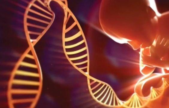 Wellen-Genetik: Die Steigerung der Energie und das Nachwachsen von Geweben, Organen, Knochen und Zähnen