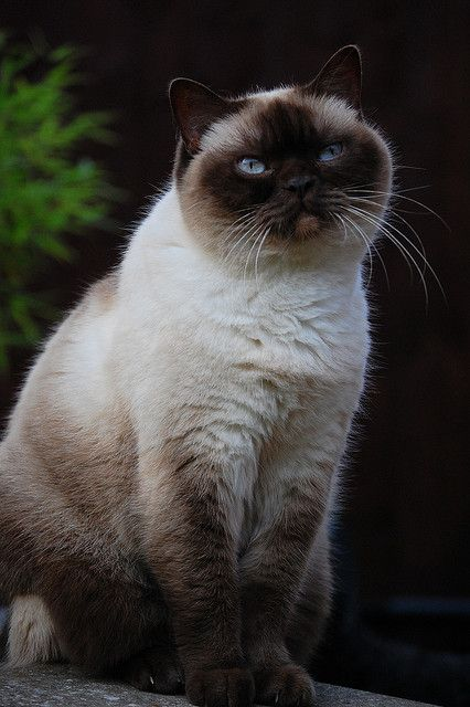 Kitty portrait by bigbluewolf, via Flickr Looks like Grumpy Cat
