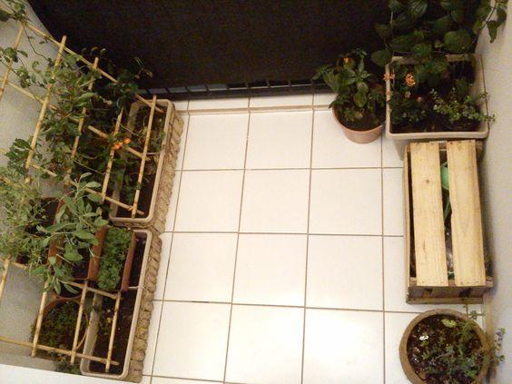trelica bambu jardim : trelica bambu jardim:Sacada Pequena: Jardim/Horta com treliça de bambu (utiliza-se uma