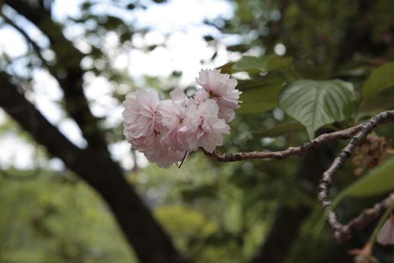 It gained the quality of focus under a shady tree branch. The dogwood blossom becomes the immediate attention, due to the brightness of color fused with its soft value.