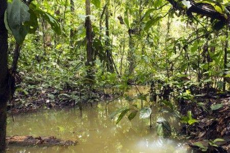 Igapó na Amazônia. Foto: Dr. Morley Read / Shutterstock.com