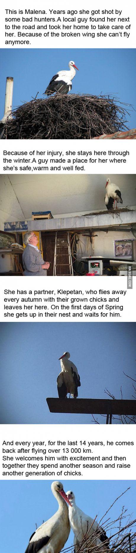 A heartwarming love story from Croatia: