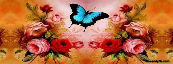 Butterfly Facebook Covers, Butterfly FB Covers, Butterfly Facebook Timeline Covers, Butterfly Facebook Cover Images:
