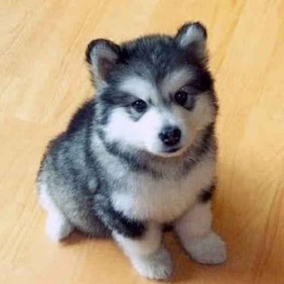 Pomhuskey! I want one!