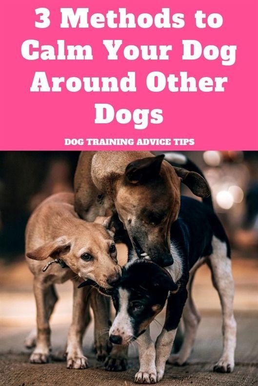 Service Dog In Training Dog Training Zuni Va Youtube Dog