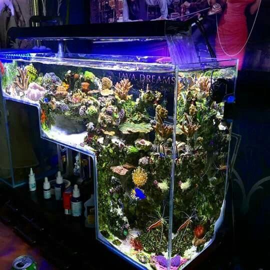 Aquarium on pinterest for Decoration poisson aquarium