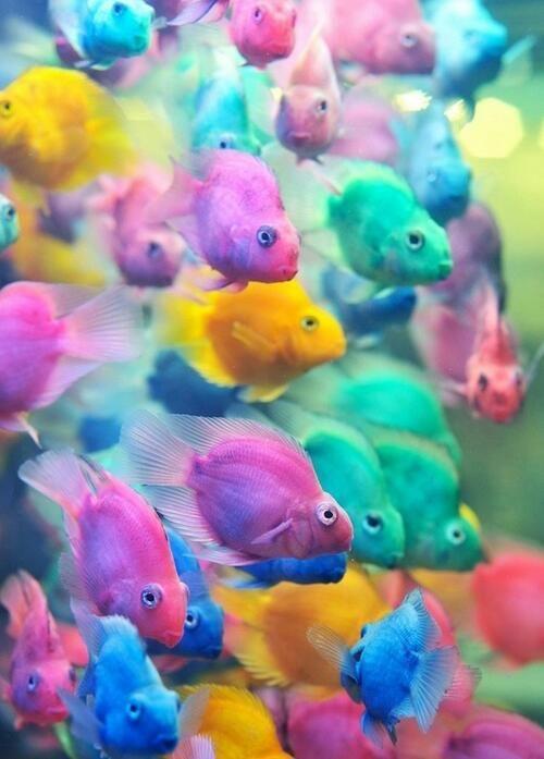 Lots of fishys
