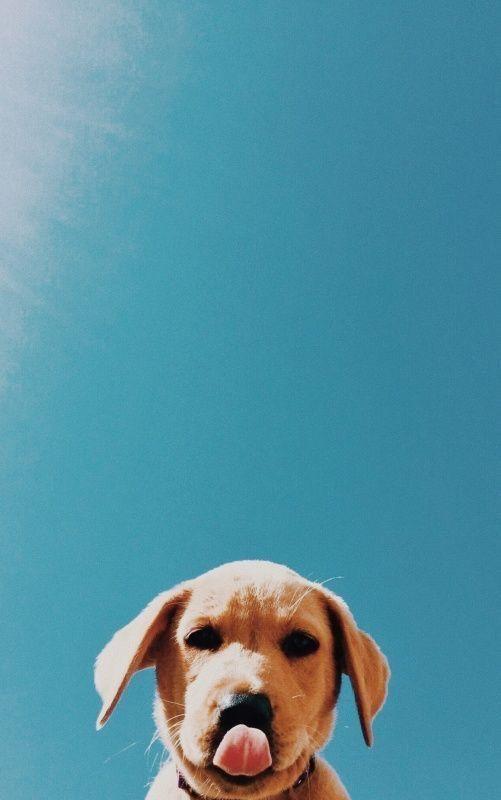 Pin Von Hund Auf Cute Love Wallpaper Hund Tumblr Hunde Tapete Niedliche Welpen