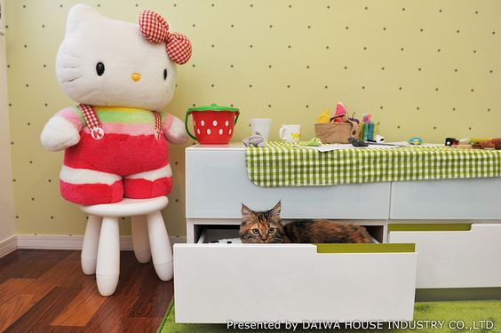 ここからは出ないよ! | 猫編 Vol.22 | ペットと暮らす家 写真集 | ダイワハウス