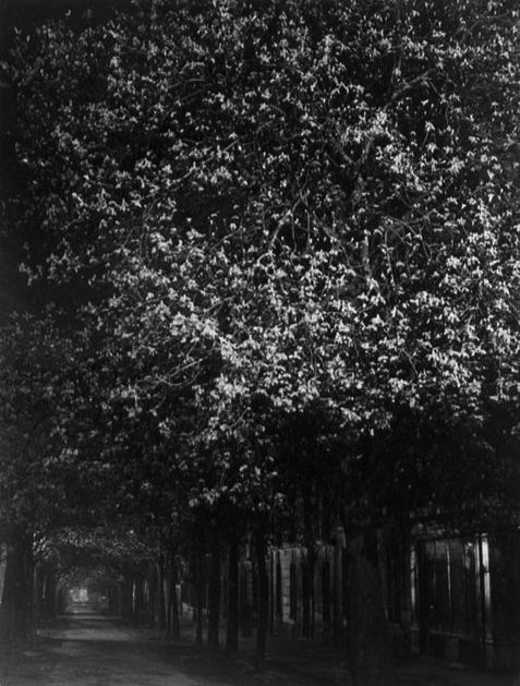 ☾ Midnight Dreams ☽ dreamy & dramatic black and white photography - Brassaï: Chestnut, 1931-1932