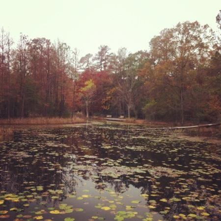 Houston Arboretum & Nature Center -   swampland