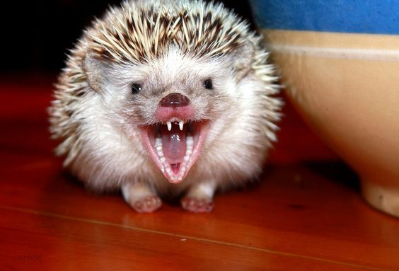 """This is what """"LOL"""" looks like.  (RAWR! by Univix, via Flickr)"""